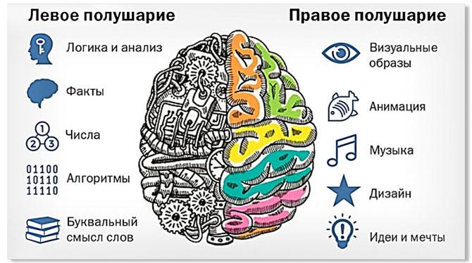 polusharia-mozga